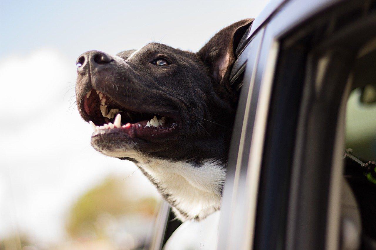 Guida Completa: Migliori Trasportini e Gabbie per Cani 2020
