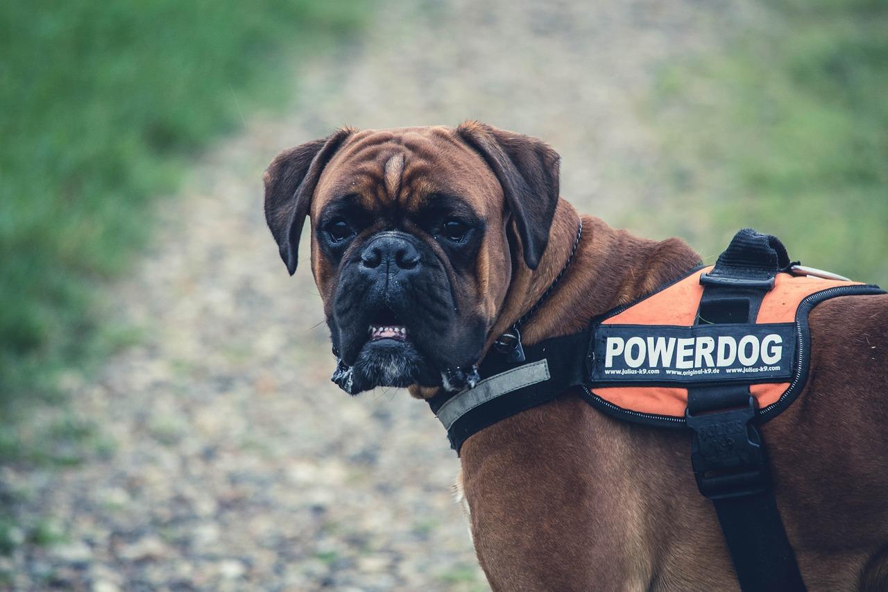 Regali Unici per il cane o amante del cane: Gli Indispensabili!