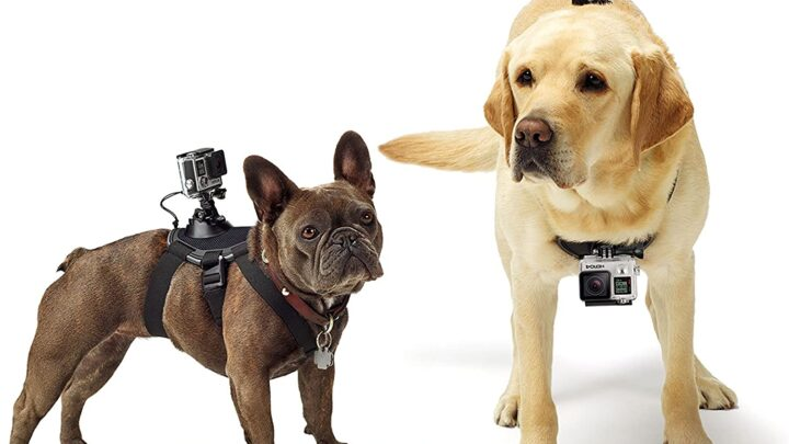 Guida: Come montare una GoPro per Cane, Migliori Pettorine Video