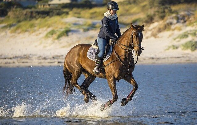 I migliori stivali da equitazione: Lunghi o corti, il modello che più ti si addice