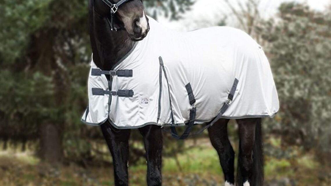 Le migliori coperte anti-mosche per i Cavalli: i migliori completi per il cavallo
