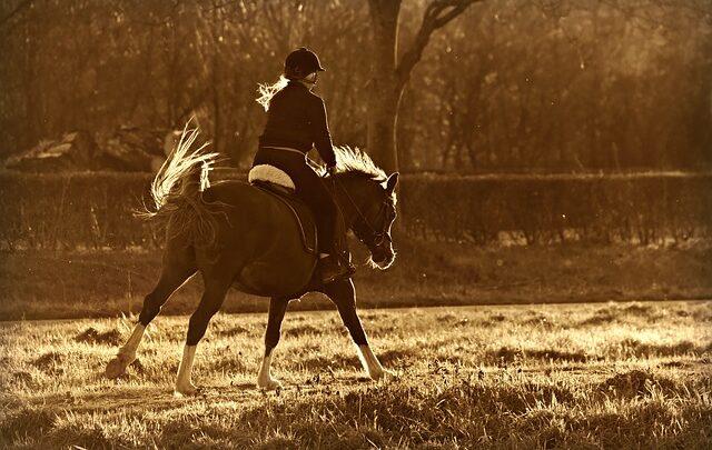 Le migliori giacche da equitazione: Eleganti e pratiche protezione dalle intemperie