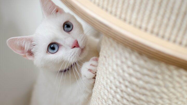I miglior tiragraffi per gatti: Salvate i mobili di casa da graffi