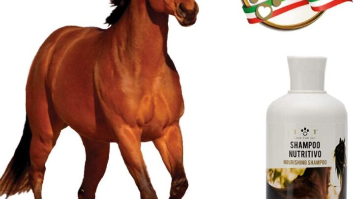 I migliori shampoo per Cavalli: il tuo cavallo pulito e sano