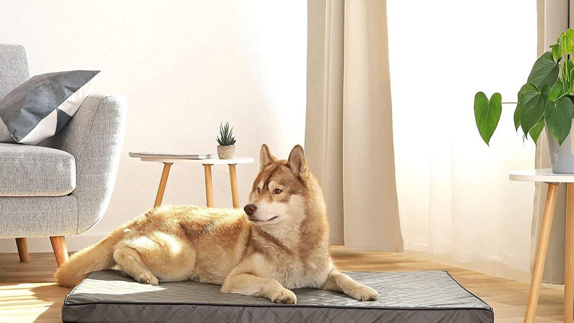 Miglior letto per cani di grandi dimensioni: massimo comfort per il cane