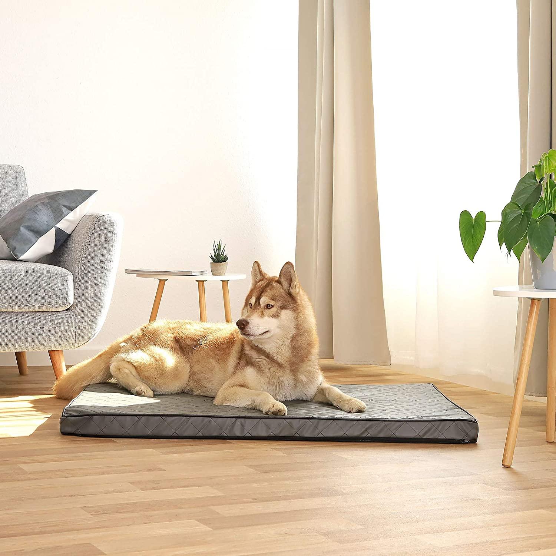 Miglior-letto-per-cani-di-grandi-dimensioni-2 Migliori Antiparassitari per Cani: migliori antipulci e zecche