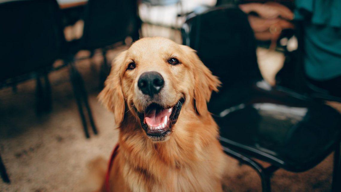 Migliori Antiparassitari per Cani: migliori antipulci e zecche