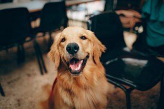 Migliori-Antiparassitari-per-Can-320x213 Il miglior shampoo per cani: Mantenere il manto pulito, sano e profumato