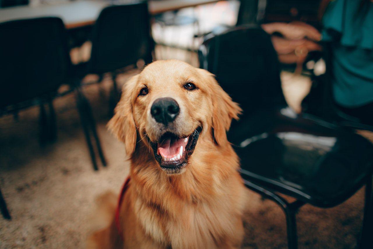 Migliori-Antiparassitari-per-Can Il miglior shampoo per cani: Mantenere il manto pulito, sano e profumato