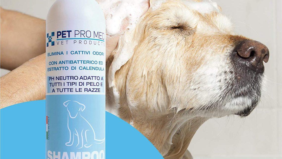 Il miglior shampoo per cani: Mantenere il manto pulito, sano e profumato